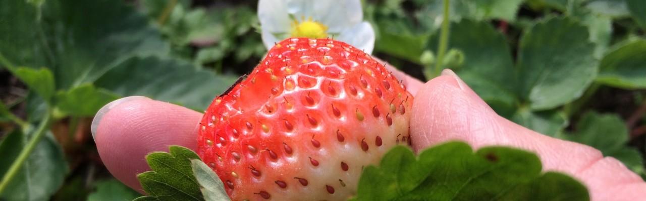 Smager jordbær bedre end chips? Det kommer an på, hvem man er.