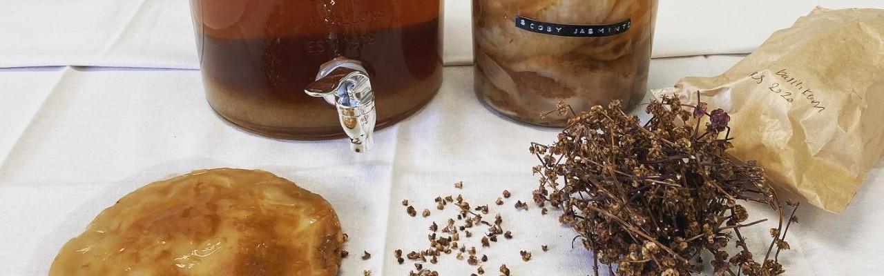 Kombucha laves ved hjælp af en gær- og bakteriekultur kaldet SCOBY. Foto: Johanne Hvelplund