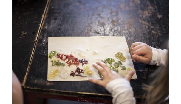 Kunstværk lavet med tang. Det dufter og smager af hav og farver. Foto: Stagbird