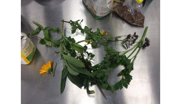Spiselige blomster og urter til at runde smukt af med. Foto: Eva Rymann